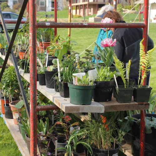 Plant Sale at Central Gardens of North Iowa