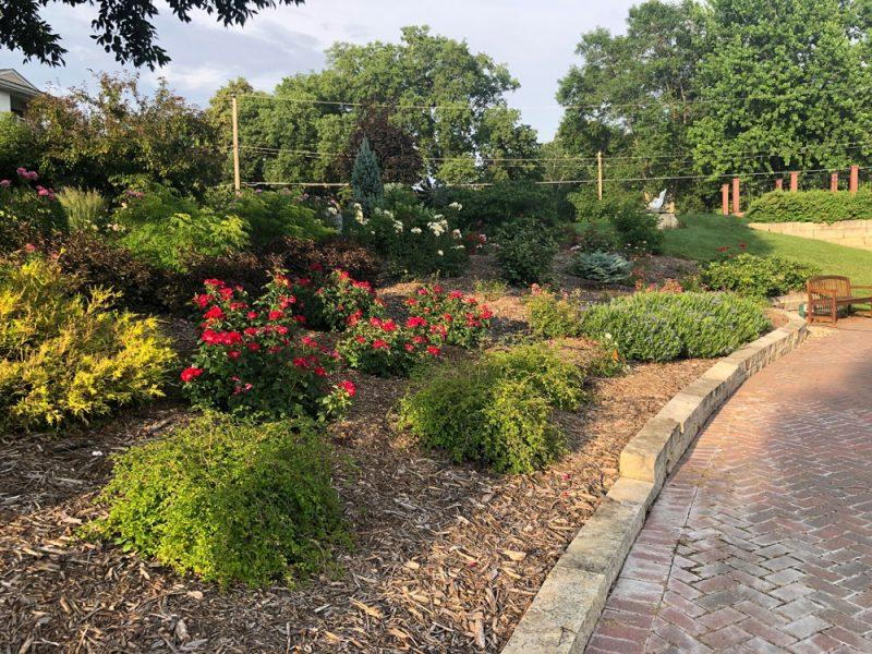 Shrub Rose Garden
