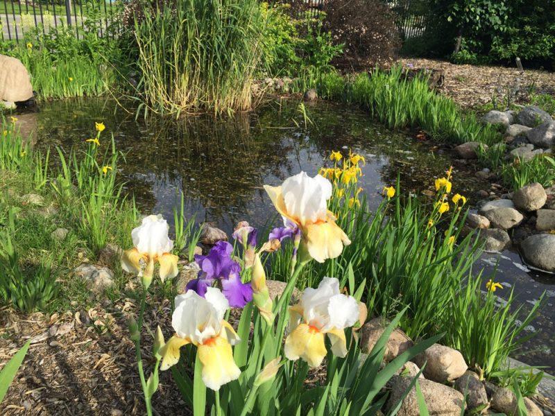 Wetland Pond Garden at Central Gardens of North Iowa